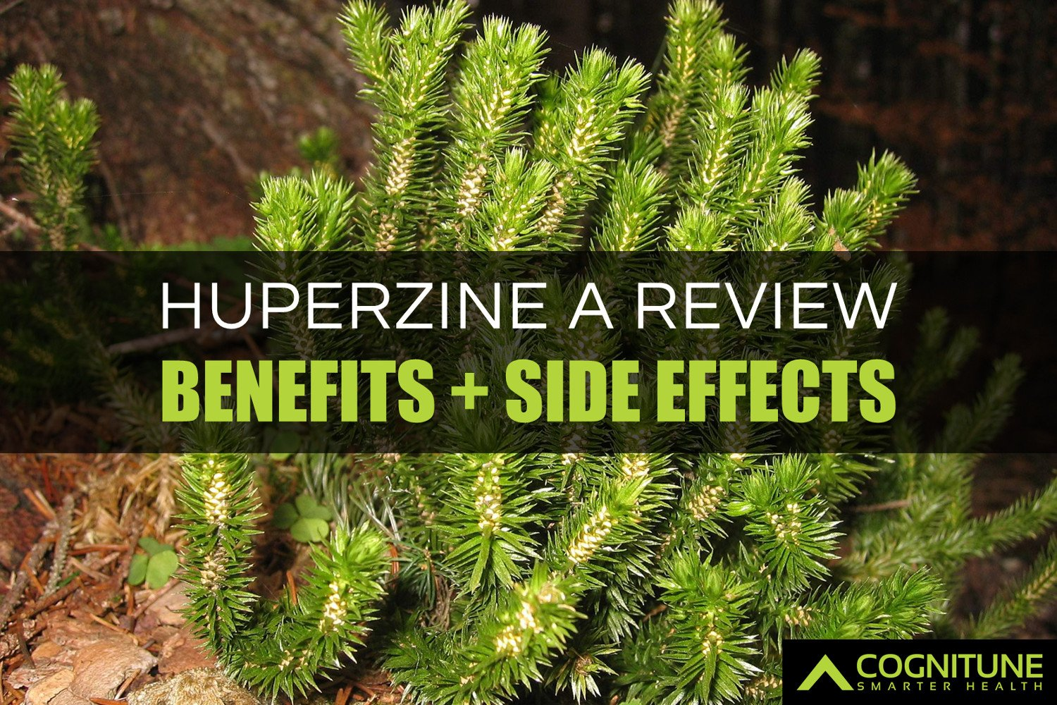 Huperzine A Review